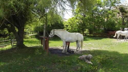Douche des chevaux